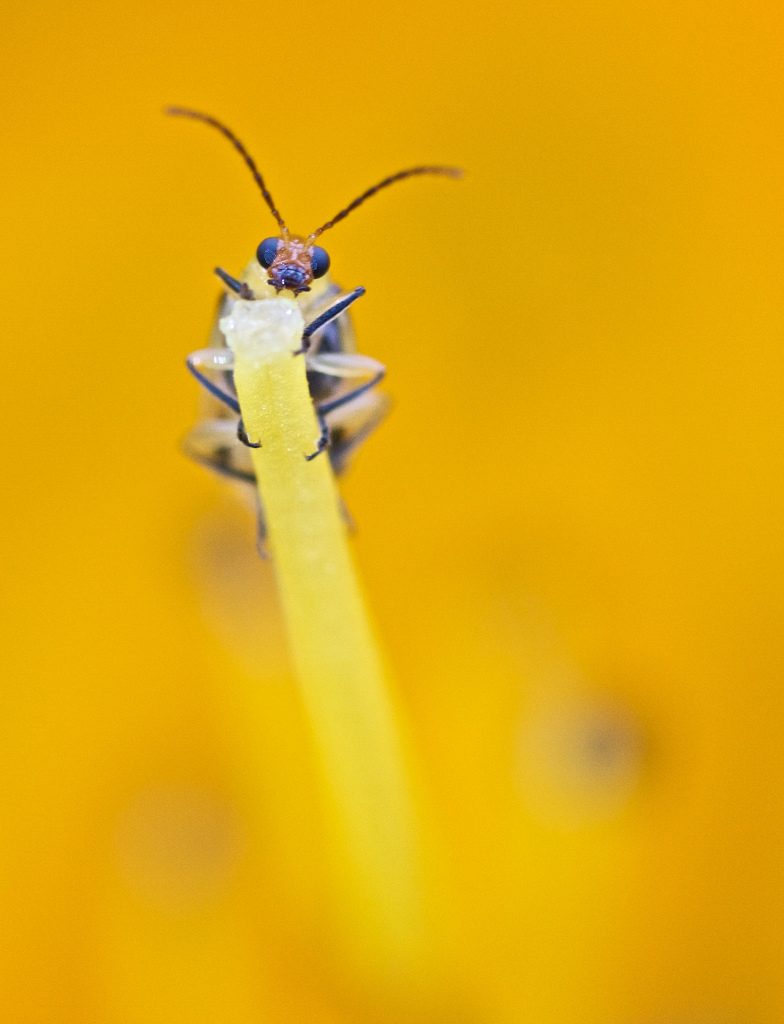 A great macro photograph of a bug captured using the Sigma 70mm F2.8 giving a great example of the type of image quality the lens is able to provide your Sony a6500.