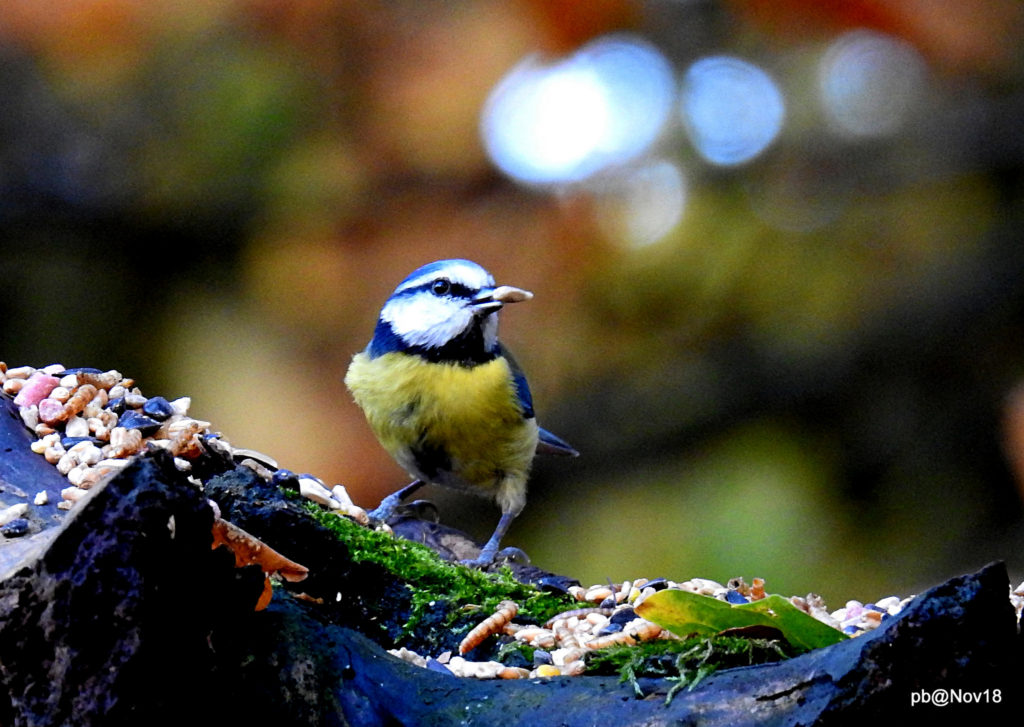 A great photograph of a bird captured with the Nikon p900 showing the image quality available for a very fair price.